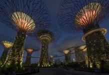 Illuminazione Gardens by the bay